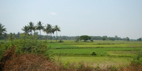 weltreise-indien-mysore04
